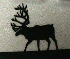 personalized caribou